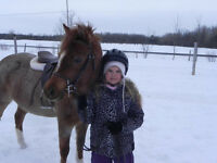 Pony or Horse of your own for Christmas