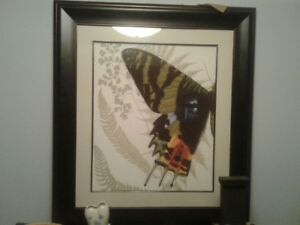 2 LG butterfly pics