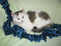 *** Gorgeous Fluffy Kitten - Take Him Home Today!! ***