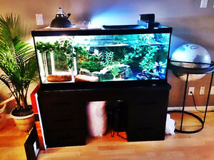 75 gal Aquarium with stand - FULL SET-UP AVAILABLE