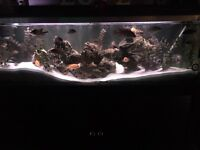 Forefoot fish tank with fish every think you need is with this