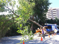 CAMBRIDGE TREE REMOVAL PRUNING STUMP GRINDING FIREWOOD LIC & INS