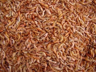 Gammarus Food For Turtles - Tropical Fish 100g Gammarus Shrimps All Water types