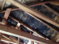 Mould Removal Cost effective remediations