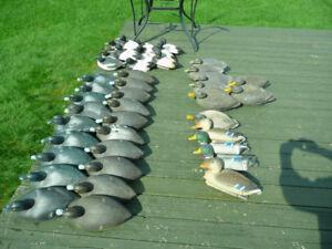 Appelants de canards