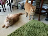 Boo and Buddy FREE TO GOOD HOME