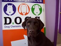 Dog grooming, daycare and overnight boarding.