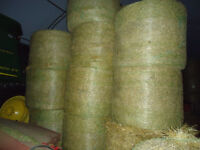 wheat straw 4x5 round bales stored inside delivery available
