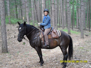 HANNA - CANADIAN MARE - HORSE FOR SALE - SOLD