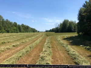 First cut Hay