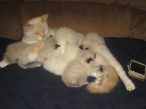 Hand raised kittens