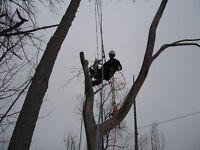 Rudi Jones L&C Ltd. - Tree Service
