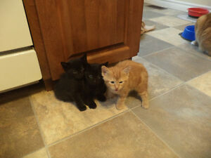Homes Wanted for 3 KIttens