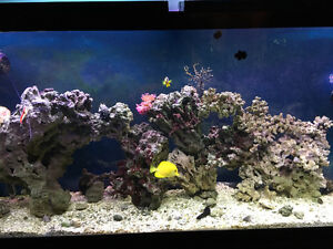 60 Gallon Saltwater Aquarium setup