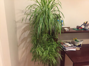 Real plants for sale