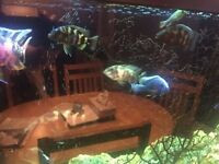Fish Tank(full setup) for sale includes fish