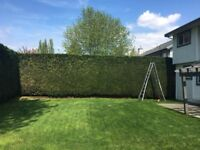Hedge and Shrub Trimming Services