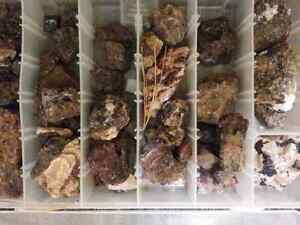 Purple fluorite .tremolite and apatite specimens from norther o  Stratford Kitchener Area image 3