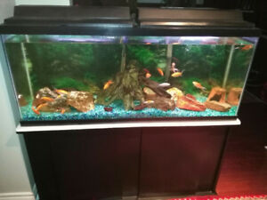 55 Gallons Aquarium complete setup in mint condition