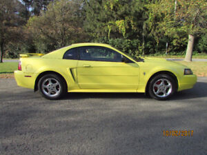 ONE MINT-SHOWROOM,2003 MUSTANG