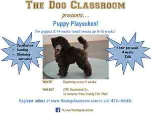 Puppy Playschool starts May 17 at The Dog Classroom