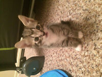 4 free kittens to a good home