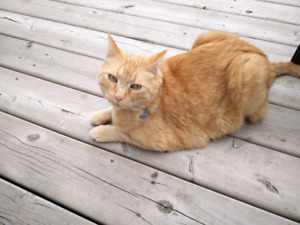 Cat still missing Fort Saskatchewan