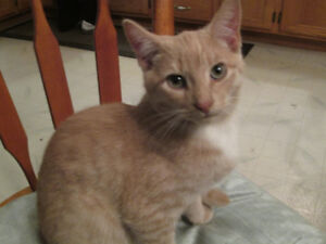 18 week old cat for rehoming