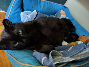 Rescue kitty panther for adoption