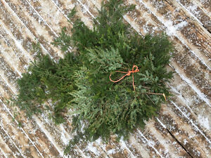 Ever Green Boughs for winter crafts, baskets and planters