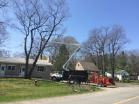NEXT LEVEL TREE SERVICES INC. * tree removal and stump grinding