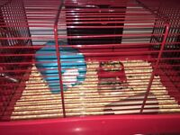 2 hamsters and 2 cages FREE to a good home