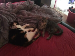 2 Beautiful cats to give to a good home