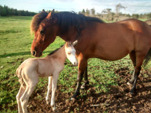 Horse/filly for sale