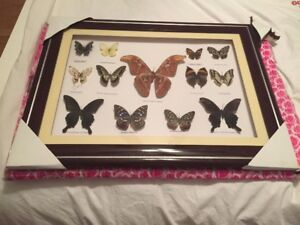 Butterfly framed collection