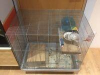 2 x Male Rats