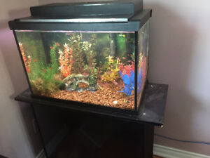 20 Gallon aquarium/stand  and 2 beta tanks - all accessories