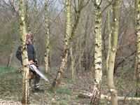 Arboricultural Contractors The Complete Tree Services