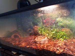 Ball python and enclosure
