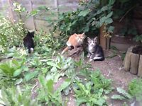 Young 2 month old kittens for sale