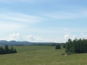 Custom Grazing for 2017 reserve now in B.C.'s Cariboo District
