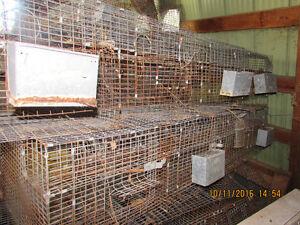 Chinchilla Breeding Cages
