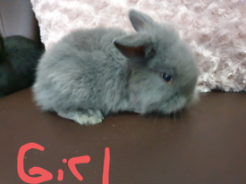 baby rabbits 🐇