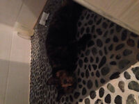 Found black and brown kitten in grandview/eastview area