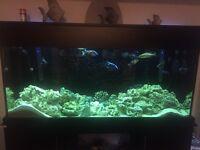 Large Fish Tank Full Setup