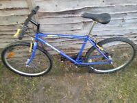 Men Mountain bike