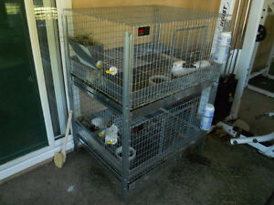 Looking to buy 2 or 3 in one section stacking rabbit cages.