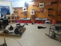 Refuge Un toit pour chats de Laval
