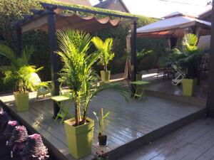 Plantes PALMIERs