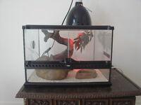 2 Leopard Geckos + Cage